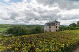 dornburger castle - 175826584