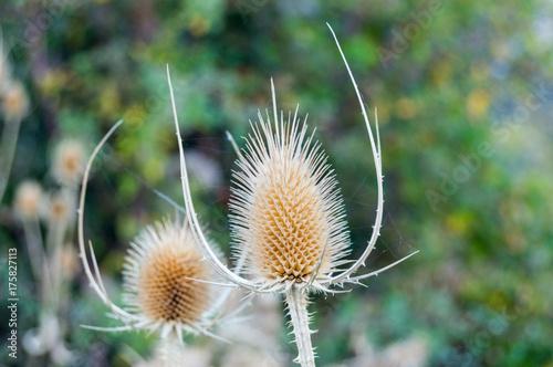 Fotobehang Paardebloemen flor de otoño