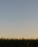 Mond über einem Feld