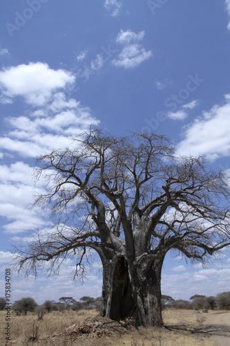 Fotobehang Baobab Alter Baobab Baum, Tansania, Ostafrika