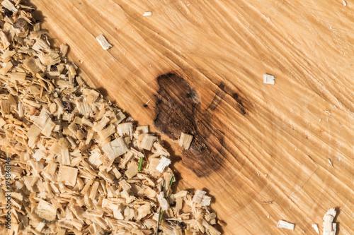 Abgesägter Baum mit Sägespänen Poster