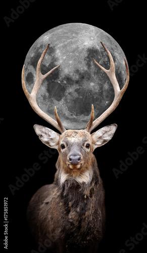 Deer with moon on dark background - 175851972