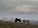 Two wild horses grazing grass on a mountain top - 175856573
