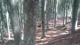 raccolta di funghi nel bosco - 175860175