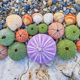 colorful sea urchins and shells on white rock and pebles beach - 175870756