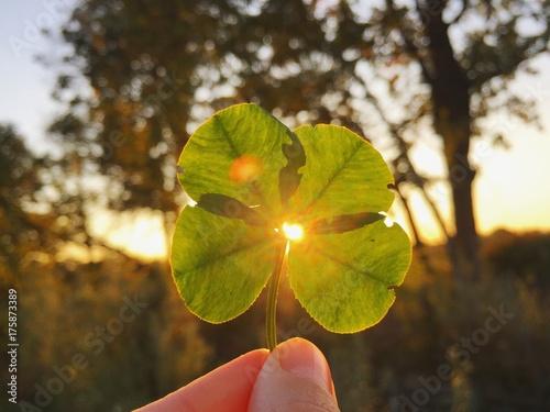 Papiers peints Nature luce quadrifoglio fortuna