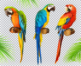 Fototapety Ara parrot. Macaw. Photo realistic 3d vector icon set