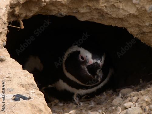 Fotobehang Pinguin Hidden Penguin