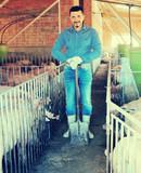 Mature farmer in hangar with hogs. - 175907768