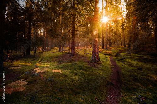 Keuken foto achterwand Weg in bos Sentier dans la forêt en automne