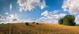 Abgeerntetes Getreidefeld mit Wolkenhimmel - 175914368