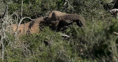Fridge magnet An Elephant eating