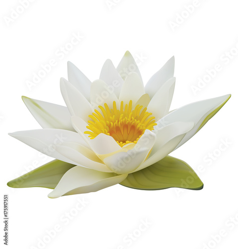 Water lily on white background. 3D illustration Poster