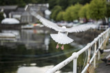 Seagull flying on port area. selective Focus - 175919572