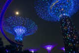Spectacular cloud forest in Singapore