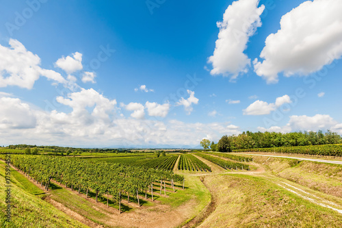 Deurstickers Wijngaard Landscape with vineyard and bleu sky with clouds.