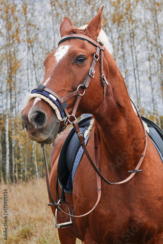 Aluminium Paarden face red horse in check amid the woods
