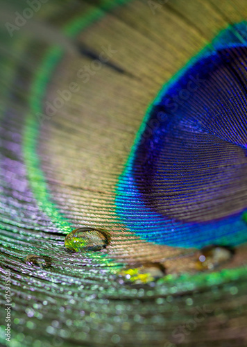 Fotobehang Pauw Colorful peacock feather eye close up view