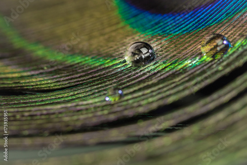 Aluminium Pauw Colorful peacock feather eye close up view