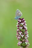 papilon et orchidée sauvage