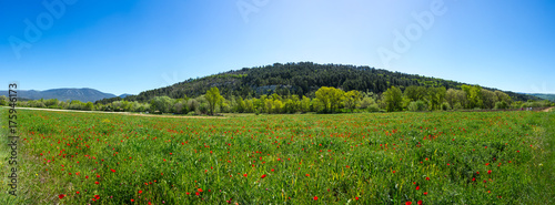 Keuken foto achterwand Klaprozen Field of blooming poppies