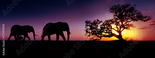 Foto op Canvas Baobab Elephant family sunset silhouette