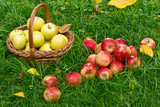 Red Apples in the Grass in the Garden - 175962164