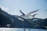Seagull - 175964527