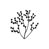 algae vector black silhouette isolated