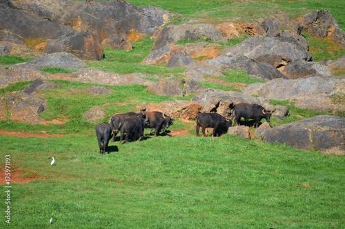 Fotobehang Bison Parque Natural Cabarceno Cantabria España