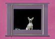 Dog in a window in the Barrio Viejo neighborhood of Tucson, Arizona