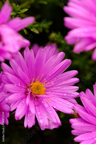 Purple flower detail - 175972549