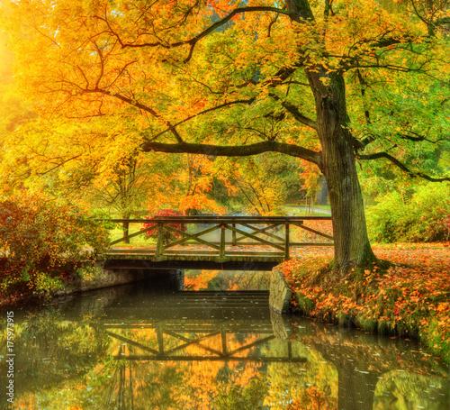 Fototapeta Beautiful autumn scenery in park.