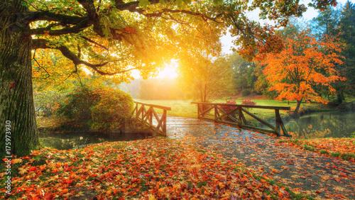 Fototapety, obrazy : Beautiful autumn scenery in park.
