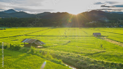 Fotobehang Pistache Rice plantation in Chiang Mai, Thailand