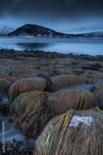 Deurstickers Nachtblauw Steingras im Fjord am Abend