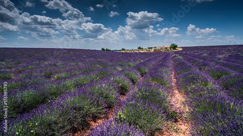 Staande foto Aubergine Lavendel im Sommer