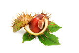 Chestnuts with leaves on white background. An isolated object. - 175986122