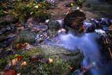 Saxon Switzerland creek - 175988145