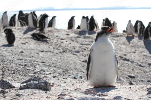 Fotobehang Pinguin Alone