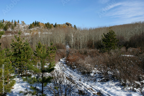 The late autumn landscape with birches with fallen leaves, several small green pines, the trackway and fantastic rocks on the horizon. This photo was taken in the Altai region, Russia.