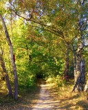 Path in sunny autumn forest landscape - 175998527