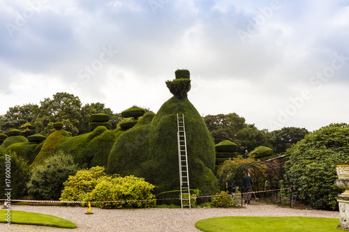 Poster Maintenance in progress of a large topiary hedging.