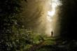 Person im Wald im Morgenlicht - 176001721