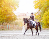 Equestrian sport event at fall with copy space. Young woman riding bay horse on dressage advanced test - 176003976