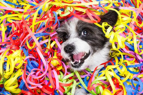 party celebration dog Poster