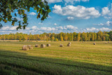 Picture of straw bales at the farm field with blue sky and green trees - 176008191