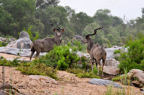 Aluminium Hert kudu and nyalas
