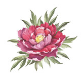 Image of Peony flower. Hand draw watercolor illustration. - 176025768