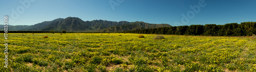 Foto op Plexiglas Blauwe jeans Anza Borrego wide mountains and flowers